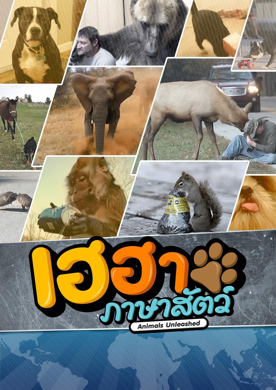 A3_V3_Animals_KT